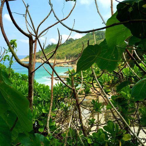 Nature On Your Doorstep Hong Kong Big Wave Bay Beach Beach