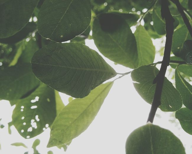 Leaves Hanging Out 30dayswild Nature_collection Nature EyeEm Nature Lover Naturelovers