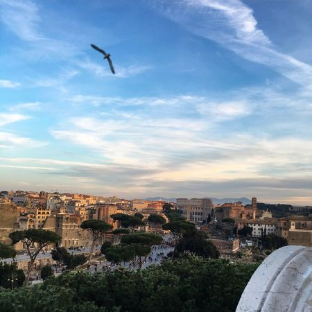 A Bird's Eye View Rome