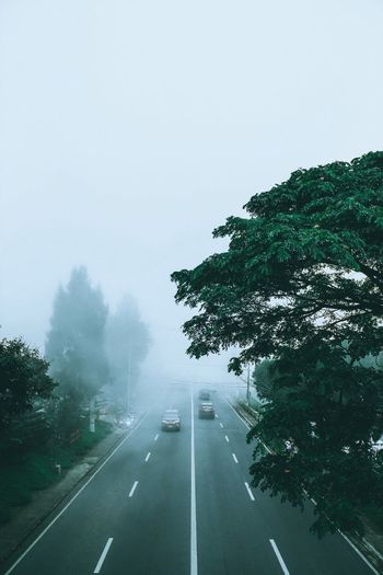 Fog. Road Transportation Fog Landscape Outdoors Beauty In Nature Scenics Sky No People Nature Day Tree Philippines Canon EyeEmBestPics EyeEm Best Shots EyeEm Best Edits EyeEmNewHere EyeEm Selects Artofvisuals