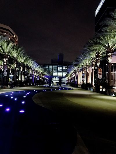Palm Tree Night Architecture Outdoors Aynaphotography Oykossstravel City Lights Built Structure
