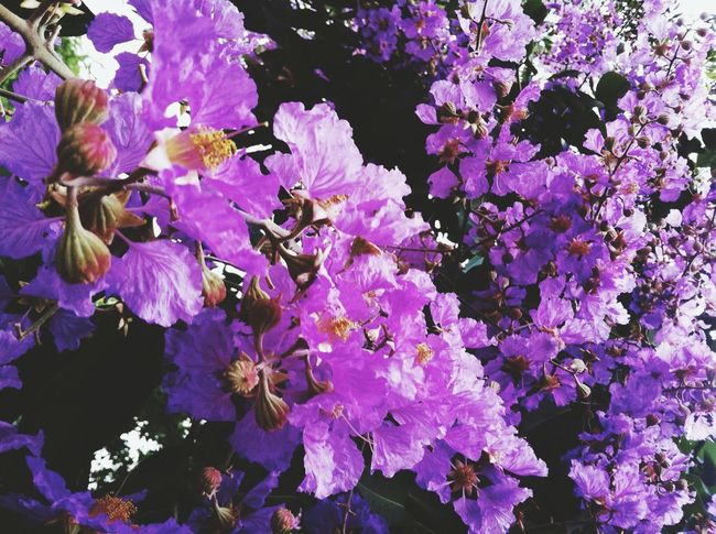 Flower Freshness Fragility Nature Beauty In Nature Growth Purple Petal No People Close-up Outdoors Plant Flower Head Day Rhododendron