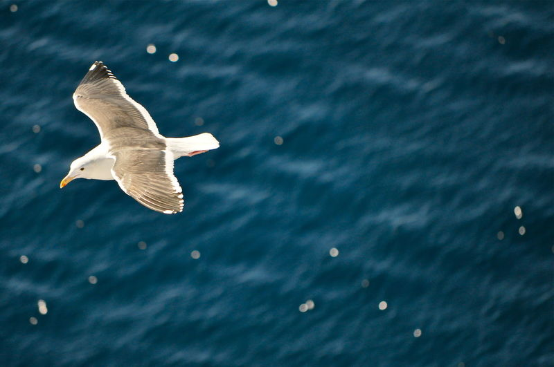 High angle view of seagull flying over sea