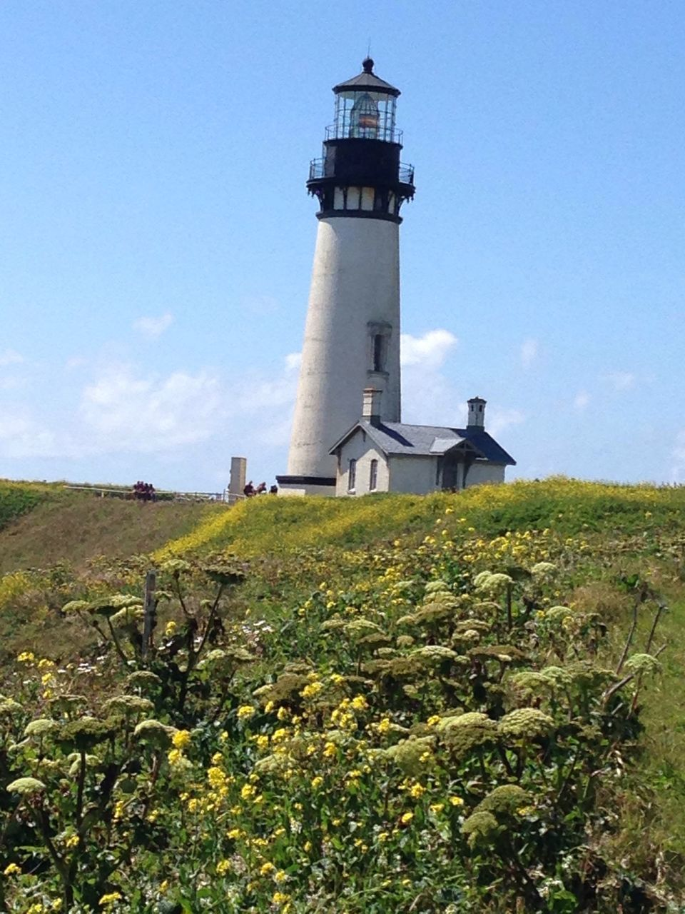 lighthouse, architecture, direction, landscape, field, grass, no people, plant, holiday, nature, sky, day, outdoors