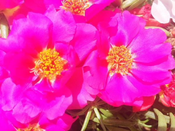 🌺🌸🌷🌼 Flowers Pink Summer Green Nature Picoftheday