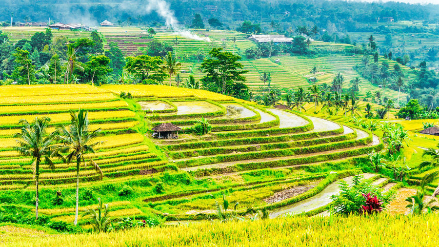 Jatiluwih Rice Terrace 3 Bali INDONESIA Jatiluwih Rice Terrace UNESCO World Heritage Site Agriculture Beauty In Nature Day Farm Field Landscape Nature Outdoors Rice Paddy Rice Terraces Rural Scene Scenics Tranquil Scene Tranquility