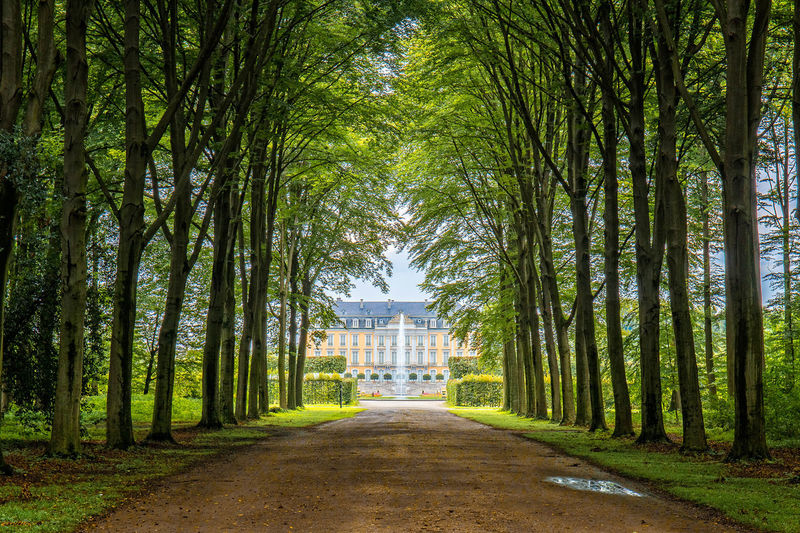 Schloss Augustusburg in Brühl, Germany Architecture Augustusburg Brühl💫 Castle Cologne Empty Road Forest Forest Path Germany Green Color Köln Monument Path Pathway Schosshund Tranquility Tree Tree Treelined Turismo Urban Spring Fever