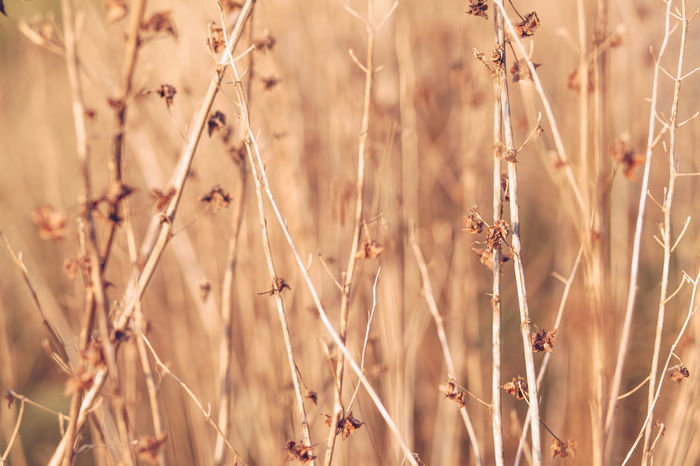 Backgrounds Day Garden Meadow Nature Textured  Widerness Withered  Grass Autumn Art