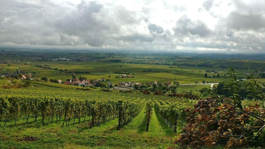 Agriculture Cloud - Sky Outdoors Scenics Day Landscape Wine Area