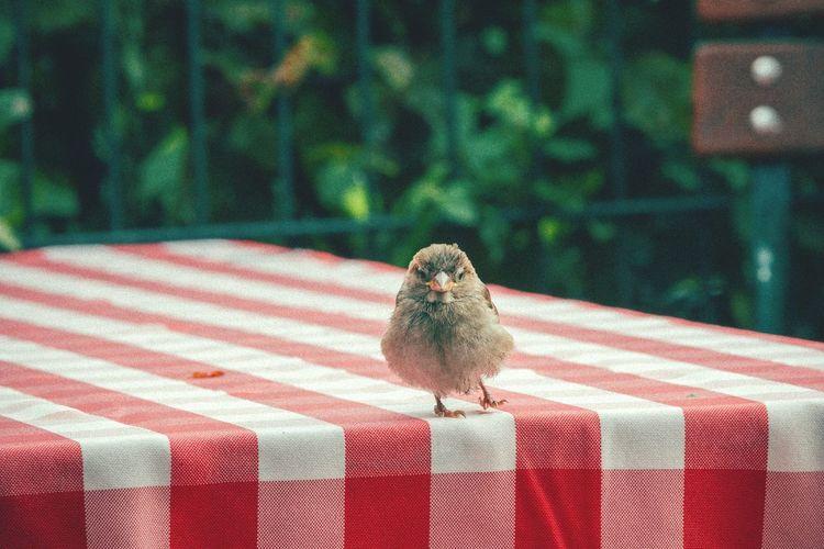 Exercise for more leg muscle Bird Photography Cute Bird🐥 Open Edit Excercising Bird 70-200mm Eyeem Best Shots - Animals Closeup Cutenessoverload EyeEm Nature Lover