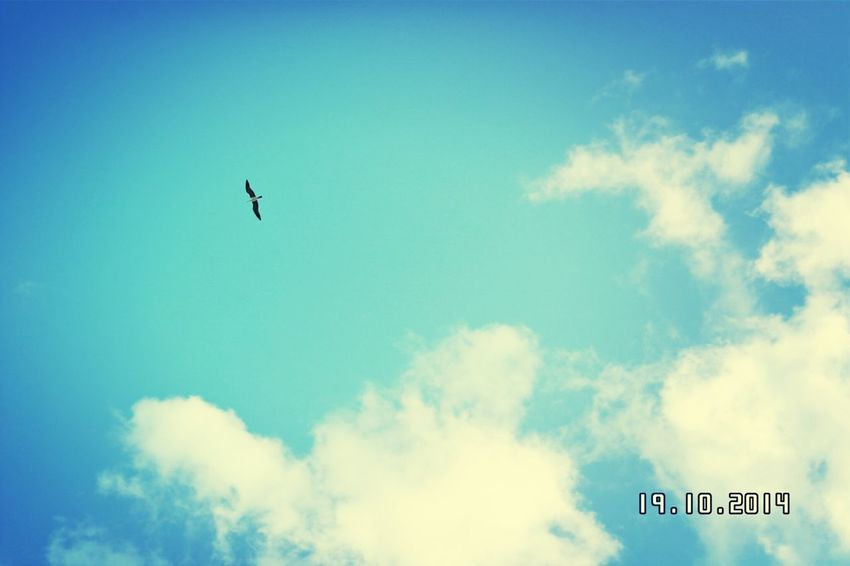 Birds Sky Bluesky Wonderful Day