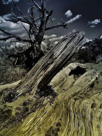 Landscape Nature Eyem Best Shots Dead reaching