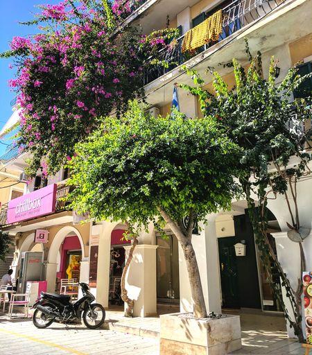 Zante Town Zakynthos Town Zakynthos, Greece Greek Islands Zakynthos Zante Tourist Resort Travel Destinations Relaxation Vacations Greek Street View