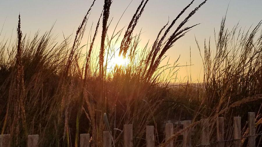 Growth Sunset