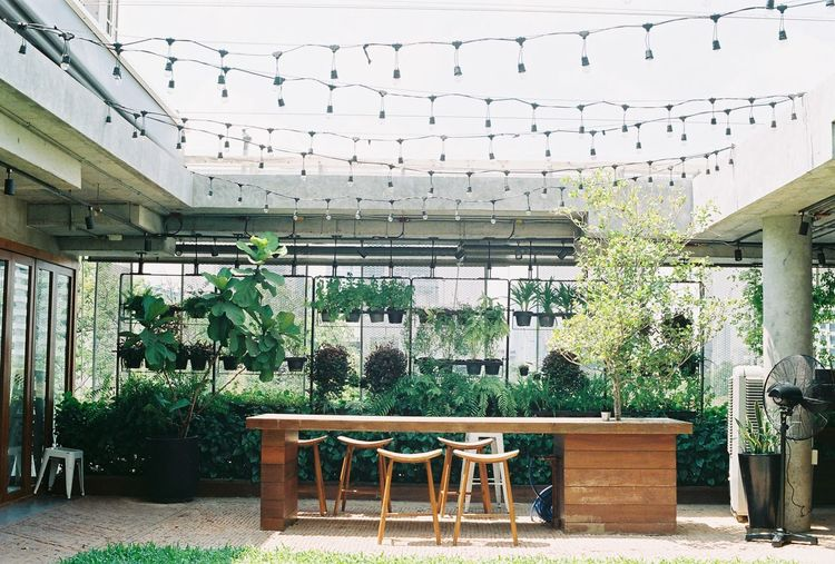 FujicolorC200 Absence Architecture Building Building Exterior Built Structure Ceiling Chair Day Empty Flimphotography Fuji C200 Fujicolor Furniture Green Color Nature No People Plant Potted Plant Seat Table Tree