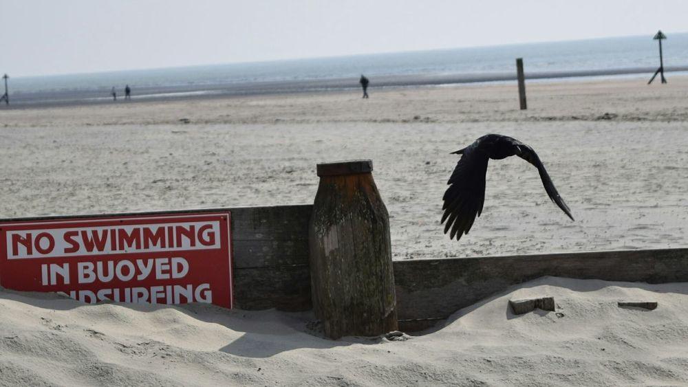 Beachphotography Wildlife & Nature Crow No Swimming