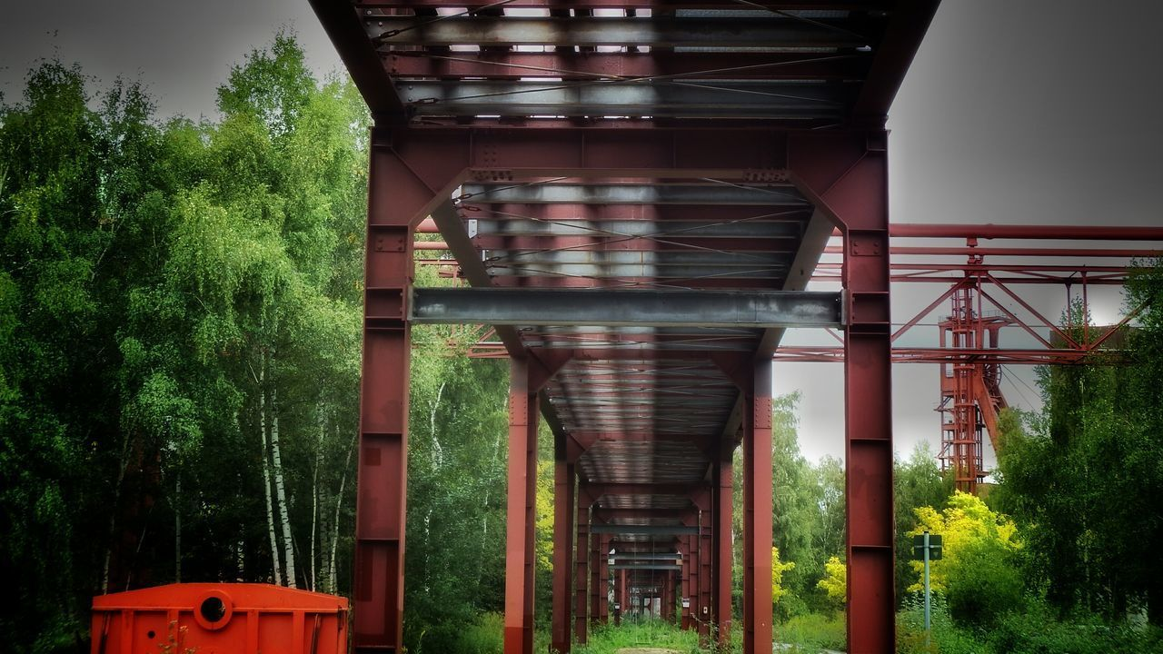architecture, connection, built structure, no people, bridge - man made structure, day, tree, outdoors, below, architectural column, growth, nature, underneath
