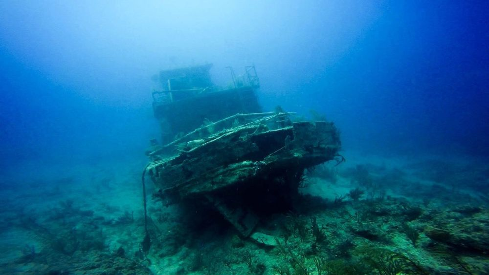 Bahamas Grand Bahama Island