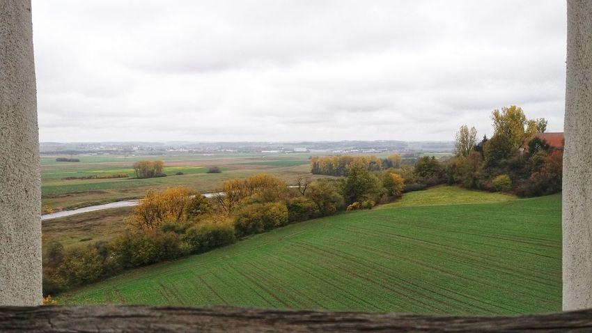 EyeEm Man EyeEm Selects Beautiful Nature Tree Rural Scene Agriculture Field Sky Grass Landscape Cloud - Sky Green Color