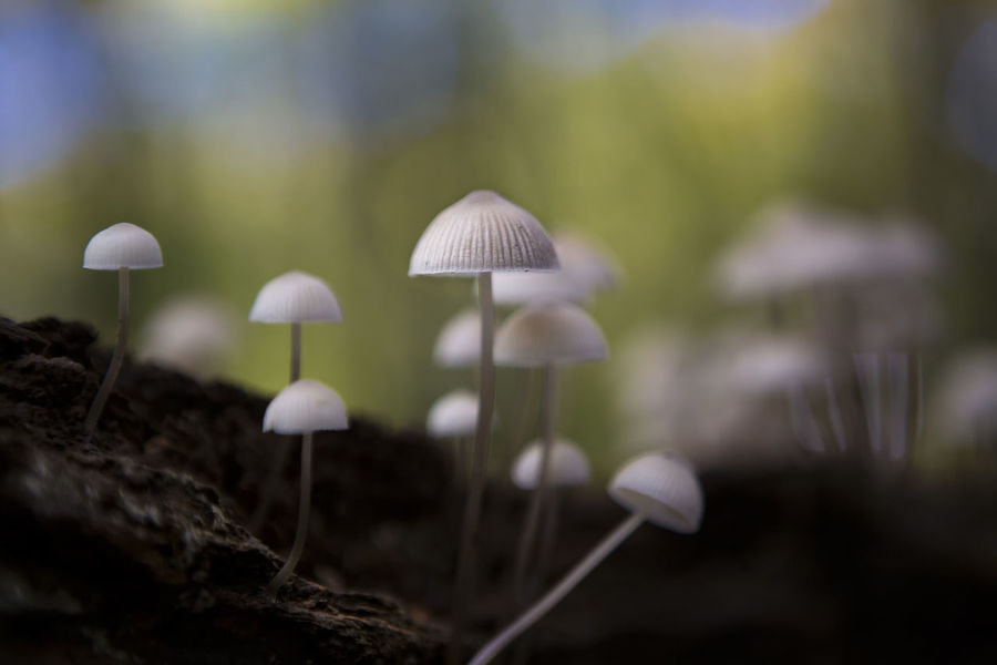Forest View Beauty In Nature Close-up Day Focus On Foreground Food Forest Fragility Freshness Fungus Growth Land Mushroom Mushroom Collection Mushroomphotography Nature No People Outdoors Plant Plant Stem Selective Focus Toadstool Vegetable Vulnerability  Woods