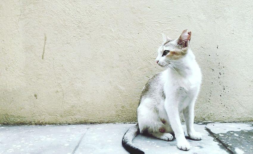 Cat Home Hello