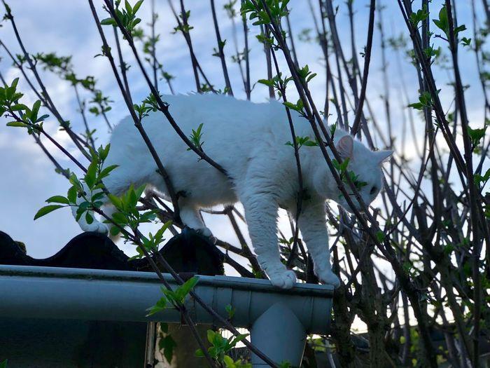 Plant Tree Animal Animal Themes One Animal Mammal Nature Animal Wildlife Outdoors