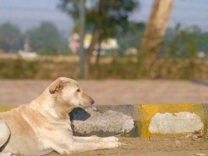 Street dog Dog One Animal Mammal Animal Themes Focus On Foreground Domestic Animals Day Pets Nature Close-up Outdoors No People first eyeem photo