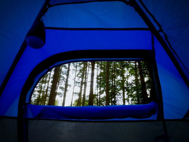 Tree Nature Window Tent Camping Morning View Beauty In Nature Blue EyeEm Nature Lover