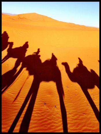 Shadows Desert Deserts Around The World Desert Landscape Caravan Camels Desert Shadows Amazing View Amazing Place Travel Photography