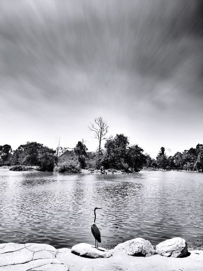 Praying for México 🇲🇽 Beauty In Nature Swan Lake Bird Black And White Photography EyeEm Masterclass Bw_lover Black & White EyeEm Nature Lover Trees_collection Sky_collection EyeEm Best Shots - Black + White