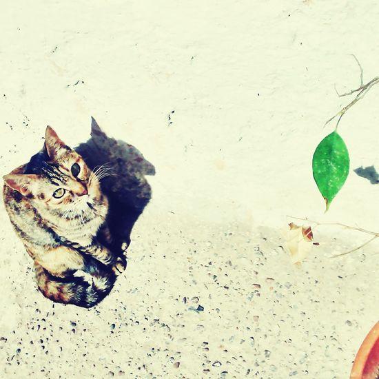 Stuar Mycat Cat Lovers Nature_collection Naturaleza Urbana Cat Eyes Cats