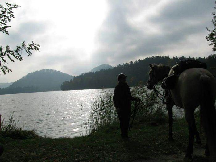 Horse Horse Riding Beautiful Animal Enjoying Life 😊