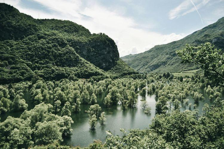 Lago di Loppio, isola di s. Andrea Green Woods Lake Lagodiloppio Trees Trentino  Landscape