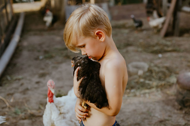 Shirtless boy holding chicken at farm
