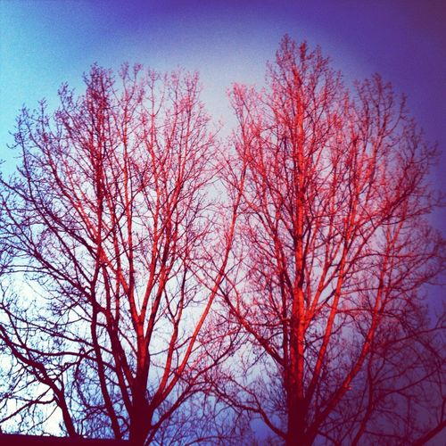 Nature Trees Red Shining Trees In The Morningsun