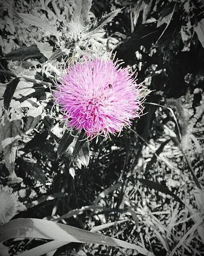 Colorsplash Nature