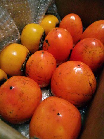 立派な柿を頂きました。ともちんありがとー! 柿 カギ