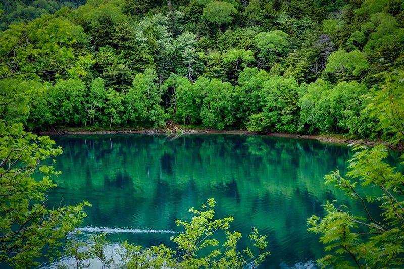 Mountain Green Green Green!  Backgrounds Copy Space Japan Green Nature Green Green Color Tree Plant Lake Water Green Color Tranquility Beauty In Nature Scenics - Nature Reflection Tranquil Scene Nature Lush Foliage Non-urban Scene Growth No People Day Idyllic Forest Foliage Coniferous Tree