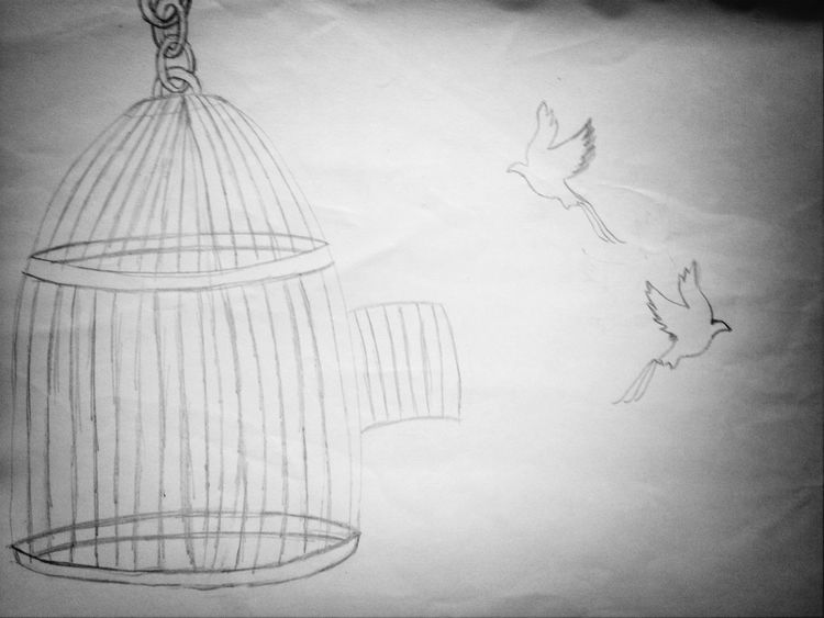 What Does Freedom Mean To You? Birds Draw Thepowerofbibs by myself
