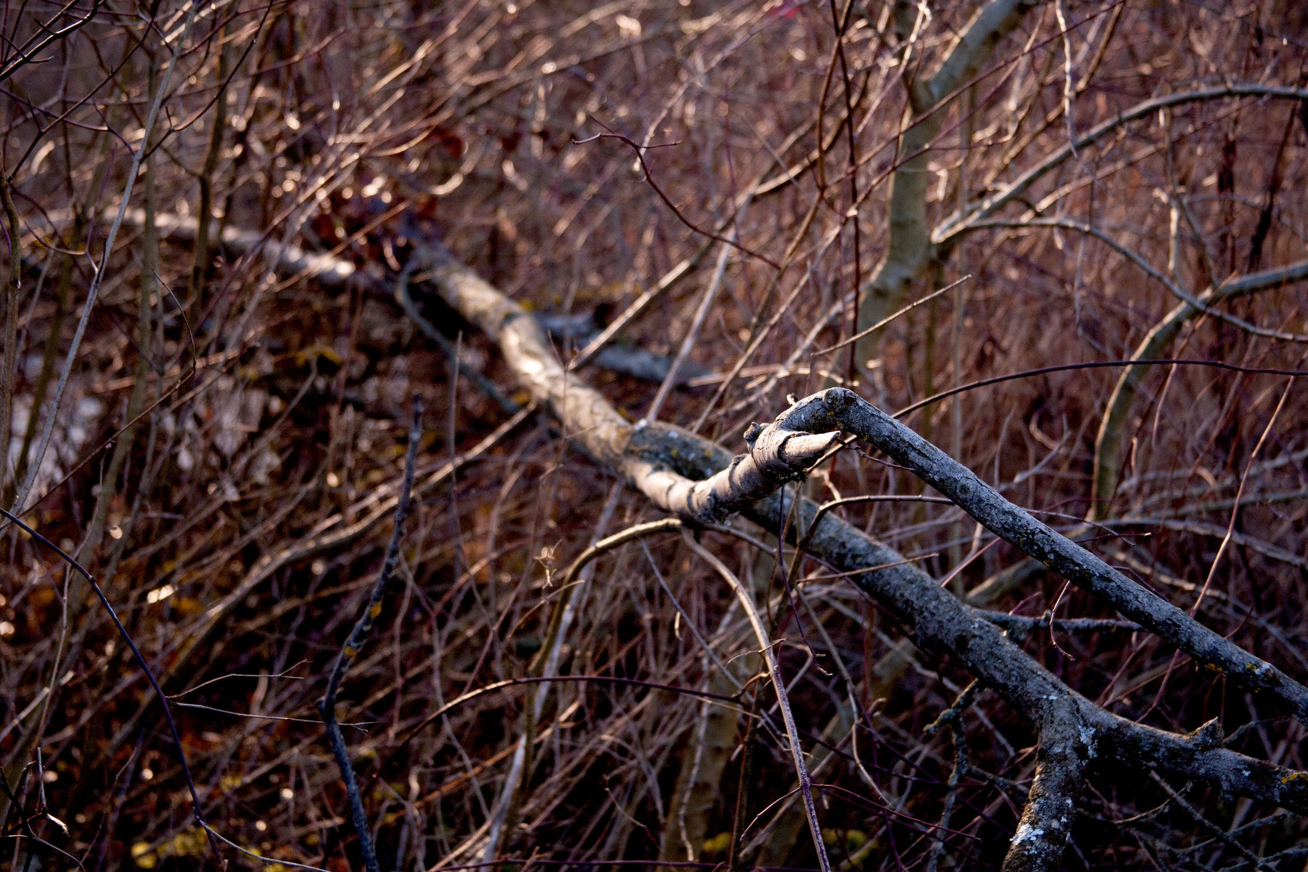 bare tree, branch, dead plant, dried plant, nature, tree, outdoors, no people, day, animals in the wild, one animal, forest, perching, animal themes, bird, beauty in nature, close-up