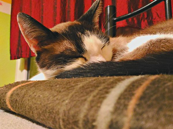 Our Cat Sleeping Cat Asus Zenfone Photography Zenfone Photography Cats And Dogs Pet Portraits