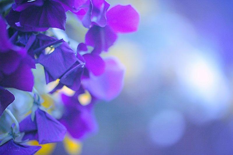 春 Spring EyeEm Nature Lover Flowers EyeEm Flower Flower Collection Fleshyplants Hazy Days