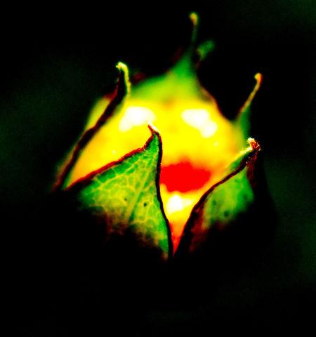 this is a very small orange flower Nature's Diversities Naturelovers Fresh On Eyeem  Fresh On Market July 2016 Macro Nature Macro_collection Macroporn Macroworld_tr Macrogardener Macroclique Macro Beauty Macro_flower Macroshot Flower Flower Photography Eyeem Market