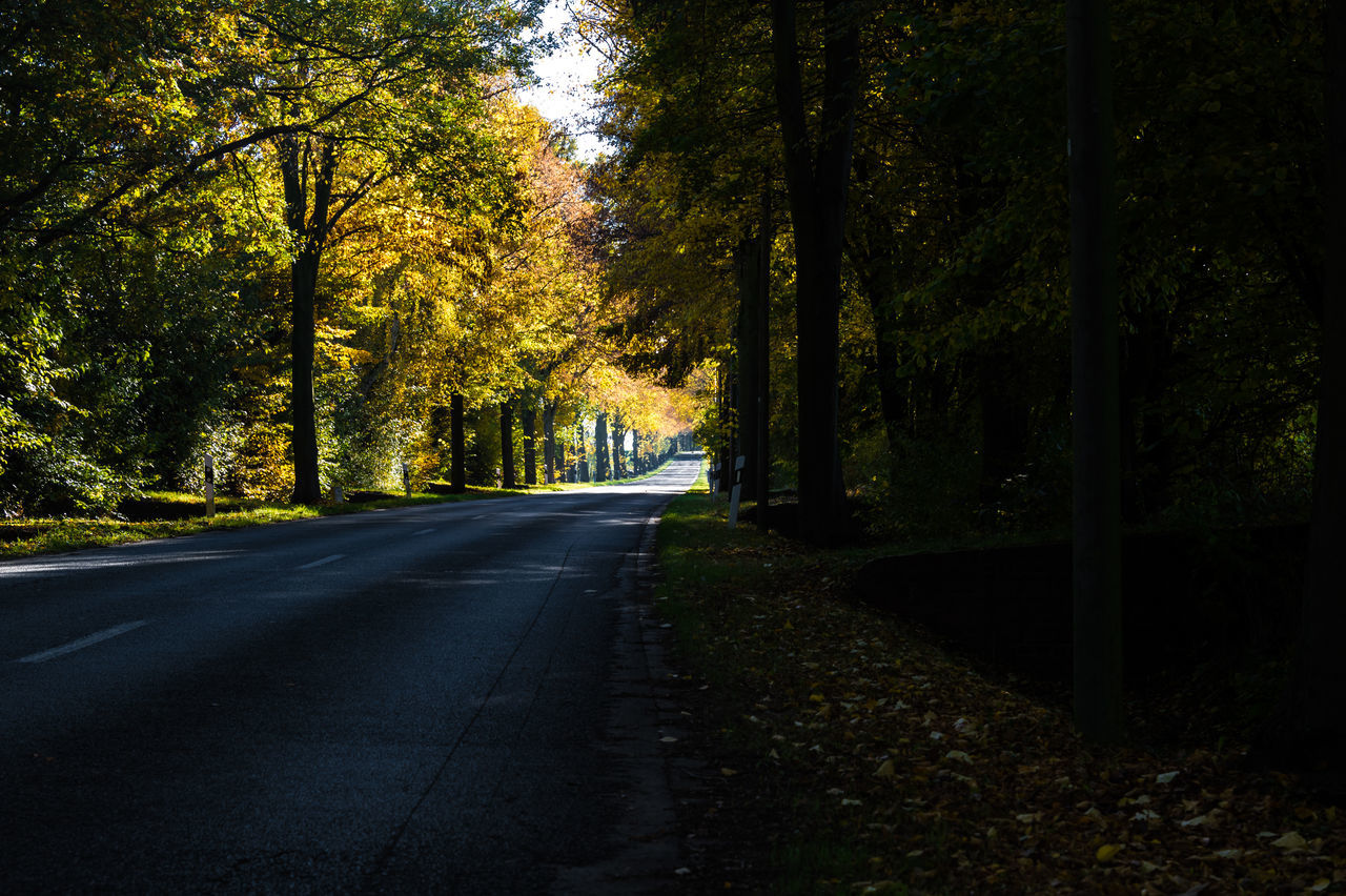 tree, nature, the way forward, road, autumn, forest, growth, tranquility, tranquil scene, scenics, no people, outdoors, beauty in nature, leaf, day, sky