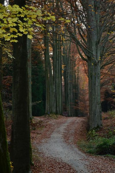 Beech Forest Sonian Forest Sonian Forest Tree Plant Land Forest Growth Nature Tranquility No People Beauty In Nature Trunk Tree Trunk Tranquil Scene Day Footpath Green Color Scenics - Nature Outdoors Non-urban Scene WoodLand Direction