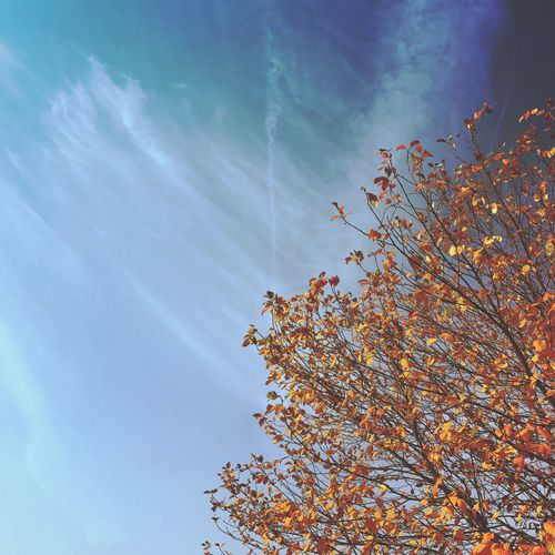 Low Angle View Autumn Tree Sky Beauty In Nature Nature Day Change No People Growth Leaf Outdoors Branch Close-up