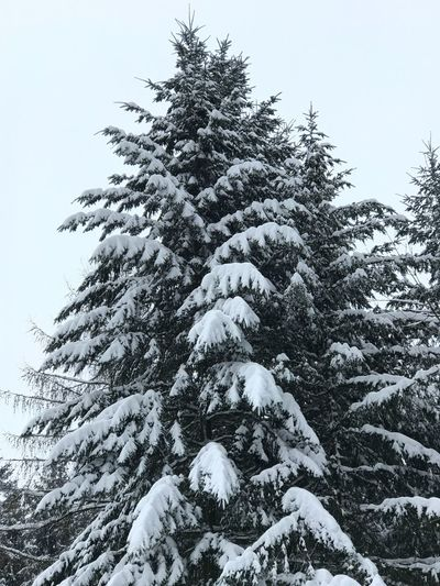 Winter Cold Temperature Tree Snow Beauty In Nature Outdoors