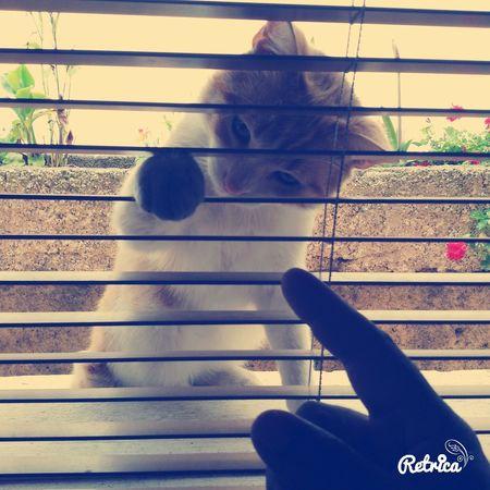 Gato Cat Cat♡ Felinos Gatosfelizes Cat Gatos Que Gatos Gatuno Juguetón Jugueto