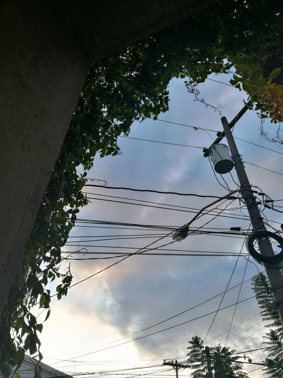 low angle view, cable, tree, connection, power supply, power line, electricity, sky, fuel and power generation, technology, day, no people, outdoors, complexity, electricity pylon