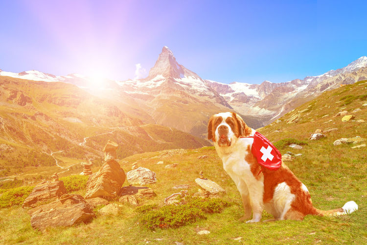 Dog standing in mountains against sky